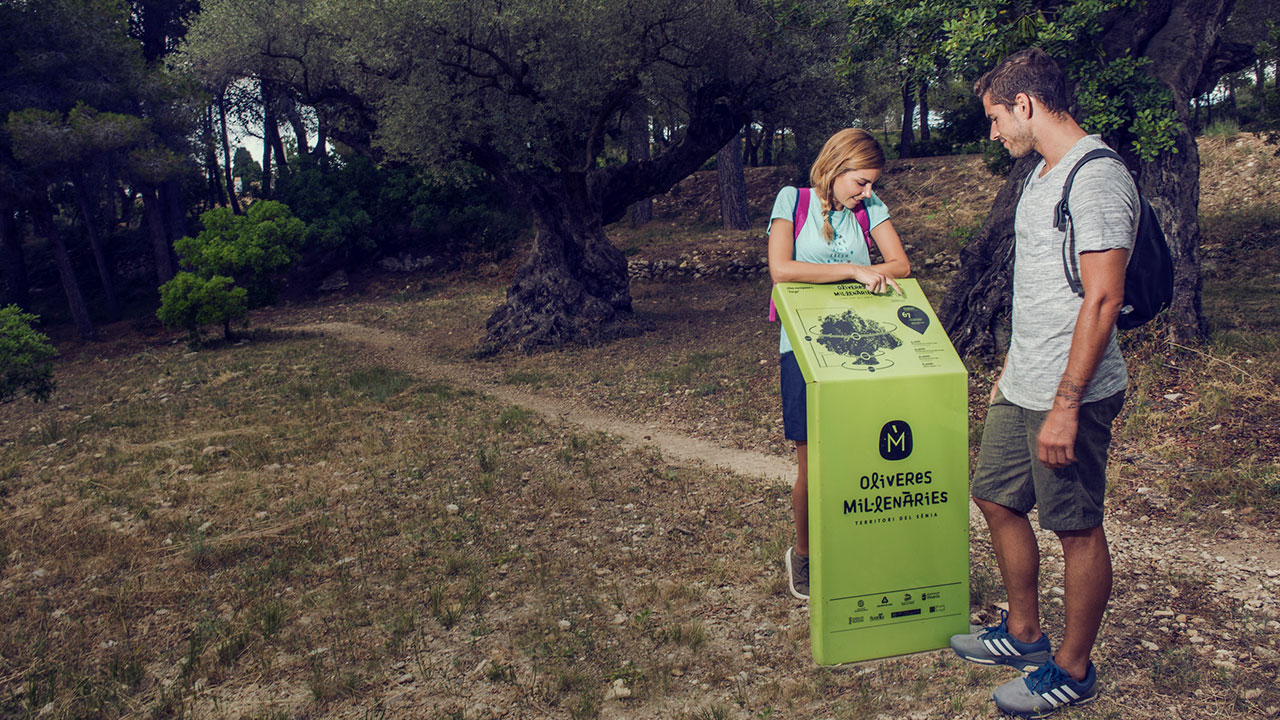 Olivos-milenarios,-Paraje-Natural-de-la-Serra-del-Puig