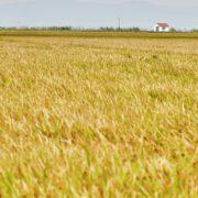 20190917, Reportaje para Visit Valencia Campos de arroz